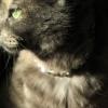 Katzen-Halsbänder