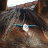 Pferde-Stirnbänder
